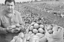 1 миллиону 115 ҳазор тонна картошкаатон куҷо шуд, ҷаноби вазир?